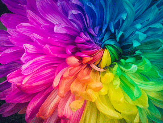 Multi-colored flower