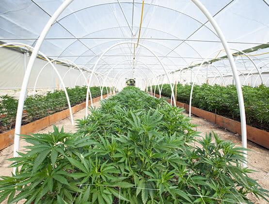 BMS cannabis agriculture sidekick