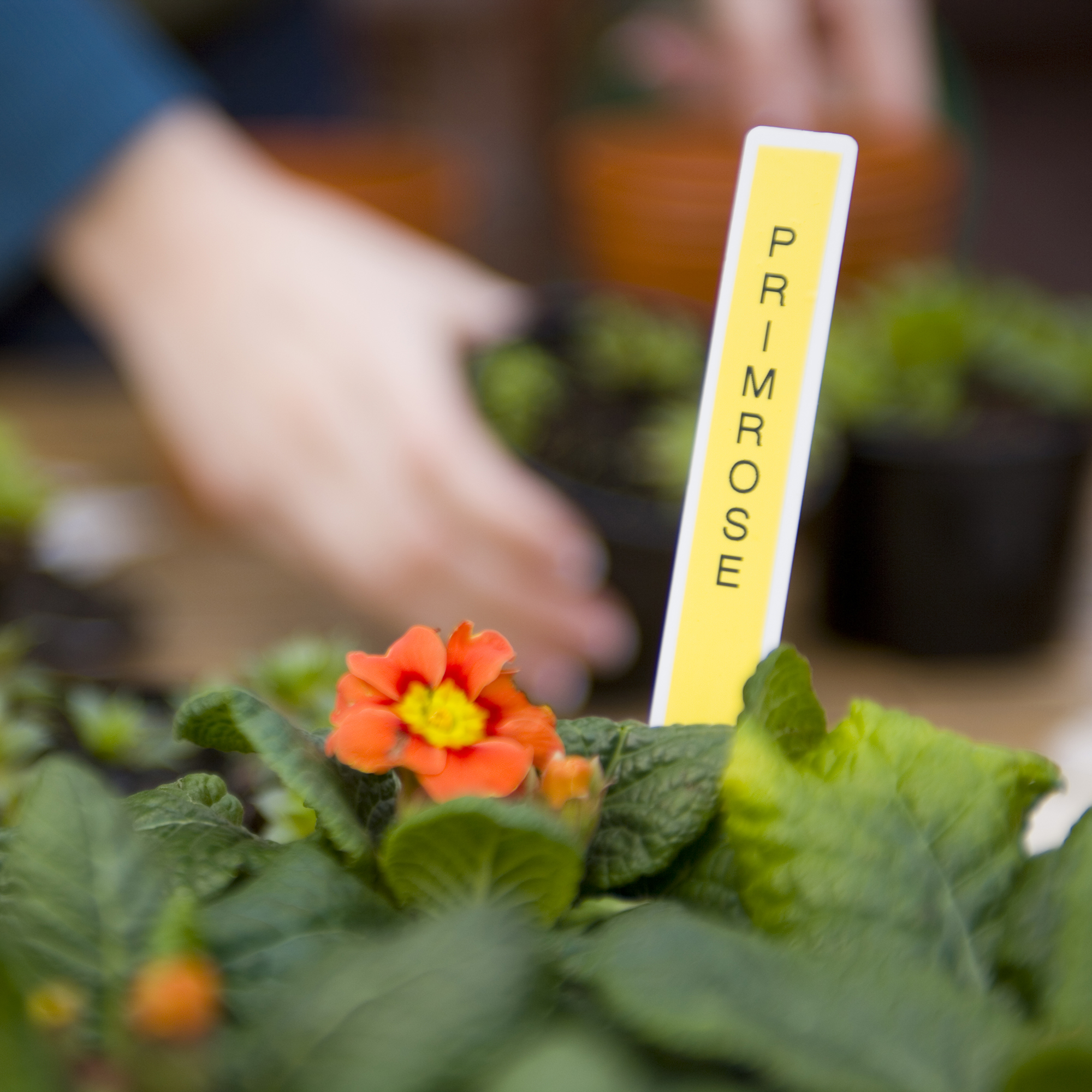Garden Applications 6