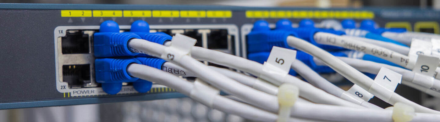 Cables connected into a networking switch