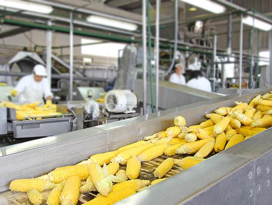 Food Processing Gear Motors