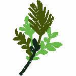 Sprig of Pine