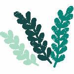 Three Shades of Seaweed