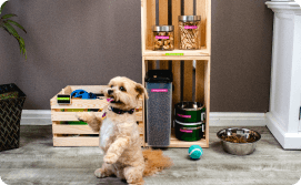 Dog and labeled toy box
